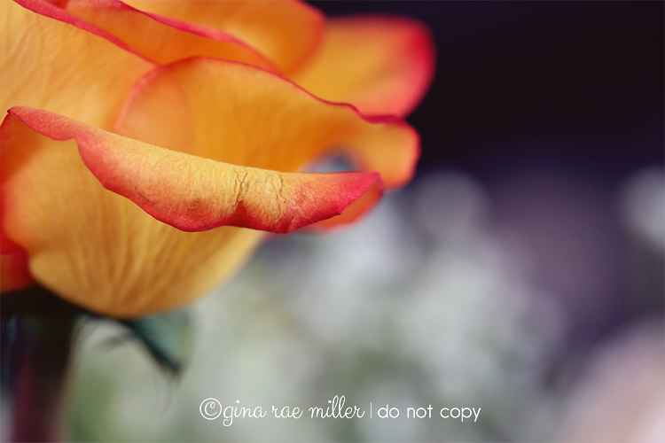 Gina Rae Miller Photography Canon Mark III Macro