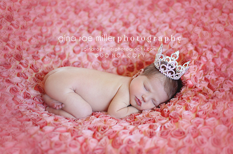 Mia5 mia rose | long island newborn photographer