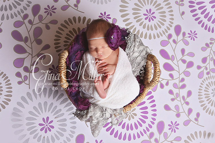 a2 avery | long island newborn photographer