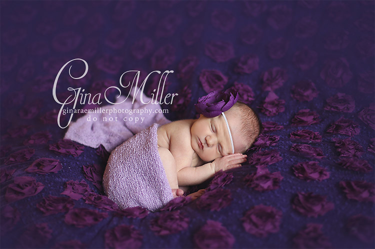 Gina Rae Miller Photography Long Island New York Newborn Photographer