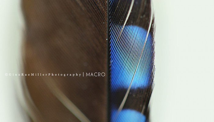 macro monday | long island nassau county photographer