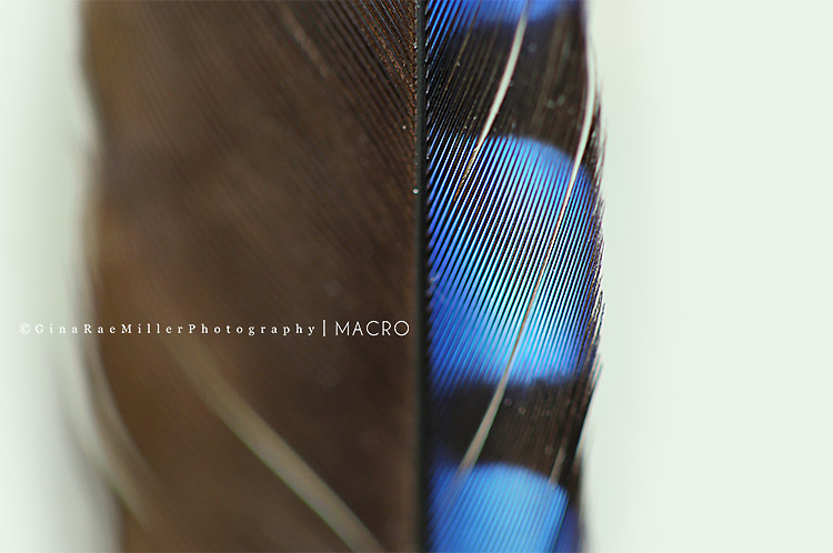 Gina Rae Miller Photography Long Island New York Photographer Macro Feather
