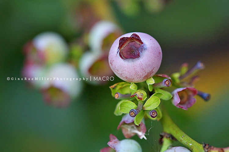 mac5 macro monday | long island nassau county photographer