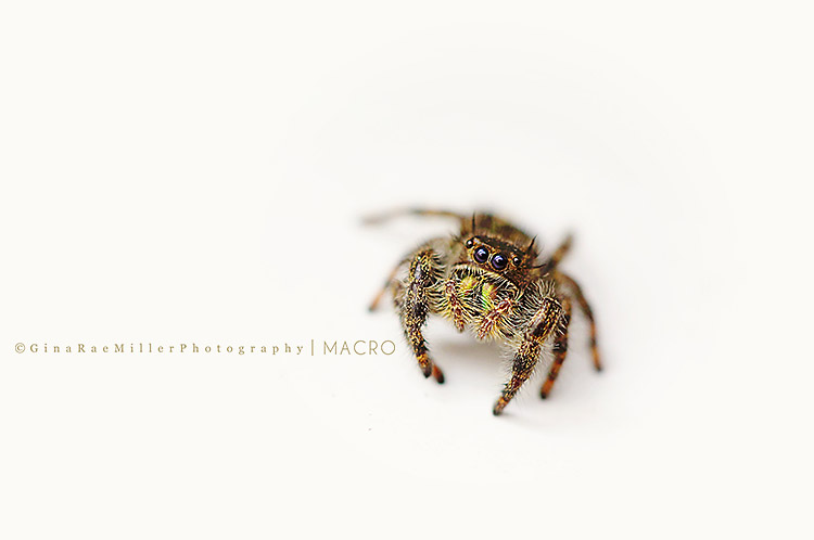 Gina Rae Miller Photography Long Island New York Photographer Macro Spider