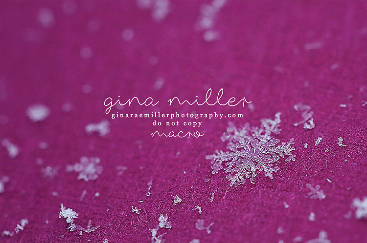 Gina Rae Miller Photography Long Island New York Photographer Macro Snowflake