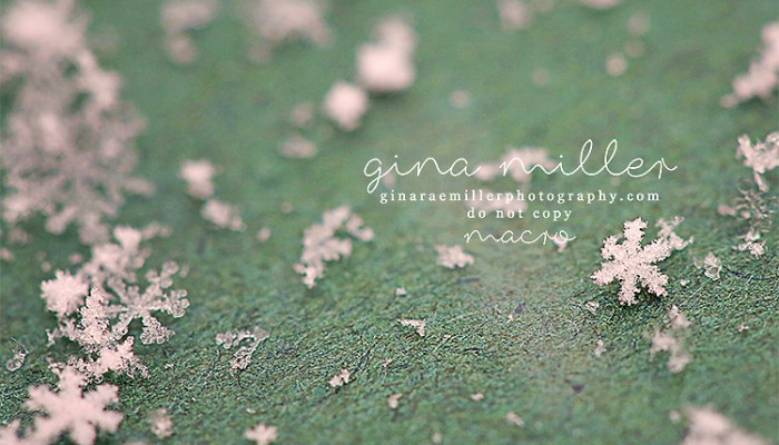 macro photography | snowflakes