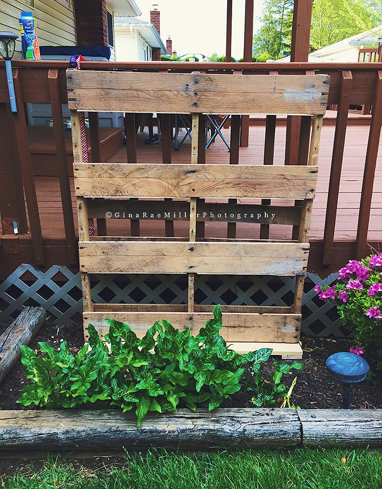 Pallet Herb Garden Gina Rae Miller Photography